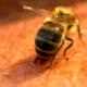 Drei Millionen Insektengift-Allergiker in der BRD