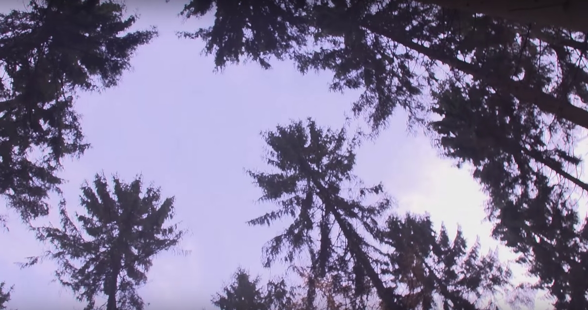realTV pflanzt Bäume